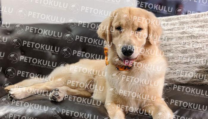 köpek eğitim merkezi